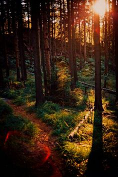 Woods are love ❤
