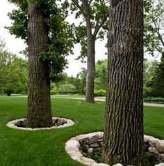 Landscaping around trees - 40 The Best Tree Ring Landscaping Ideas For Your Garden – Landscaping around trees Landscaping Around Trees, Outdoor Landscaping, Front Yard Landscaping, Inexpensive Landscaping, Hillside Landscaping, Farmhouse Landscaping, Landscaping Plants, Organic Gardening, Gardening Tips