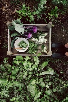 Self - sufficiency from the vegetable garden KRAUTKOPF # from # vegetable garden All Vegetables, Planting Vegetables, Vegetable Garden, Magic Garden, Dream Garden, Garden Care, Organic Gardening, Gardening Tips, Kitchen Gardening