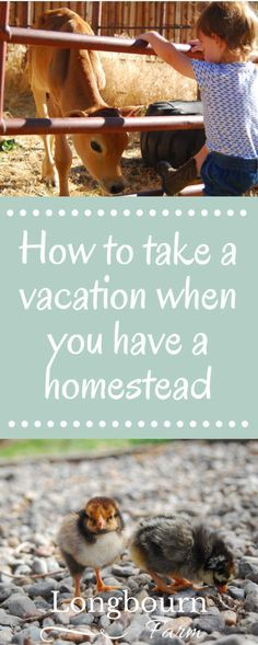 How to take a vacation when you have a homestead or small farm: Keep farm jobs low maintenance, plan trips at the right time, & hire help. Get the details!