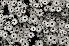 Black And White Flowers Background wallpaper Tumblr Wallpaper, Desktop Wallpapers Tumblr, Tumblr Backgrounds, Laptop Backgrounds, Laptop Wallpaper, Cool Backgrounds, Hd Desktop, Floral Wallpapers, Flower Backgrounds