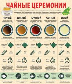 Инфографика. Чай. Виды чая. Как правильно заваривать чай