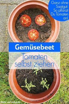 Tomaten selber ziehen With these tips and tricks from the practice can be your own in the garden or on the balcony and harvest. Amazing Gardens, Beautiful Gardens, Plant Needs, Types Of Plants, Diy Garden Decor, Garden Pots, Indoor Plants, Balcony Plants, Gardening Tips