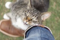 6 Weird Reasons Why Your Cat Licks You