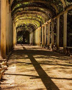 Botanic Garden, Rio de Janeiro, Brazil by  https://www.facebook.com/mmmphotostudio