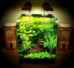 aquarium - plants only
