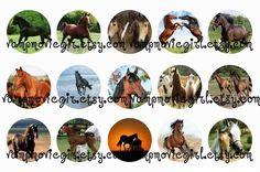 Horses Bottle Cap Images