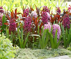 Clusters of beautiful blooms and leafy color create a picture perfect combination in this pairing: http://www.bhg.com/gardening/flowers/perennials/spring-planting-partners/?socsrc=bhgpin032915purplepassion&page=3