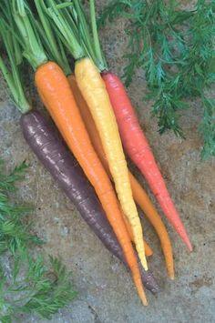 You Can Plant aRainbow  Carrot'Kaleidoscope'