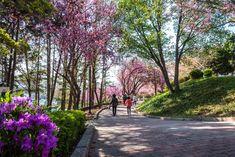 봄, 꽃, 그리고 사랑이 있는 봄 풍경.... 봄은 아름답고, 그리고 사랑이다. 이 봄이 사람의 마음을 들뜨게 ...