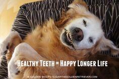Healthy Teeth Happy Longer Life #ad #smoochurpooch