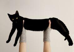 notentirelymediocre:  asaya:  via   long cat is long