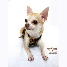 Summer Dog Collar Handmade by myknitt #myknitt #etsy #tagt #chihuahua #smalldogs #cute #crochet #diy #art