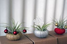 These are so cute! What a great hostess gift! holiday trio  // air plant tillandsia // by by peacocktaco on Etsy, $42.00