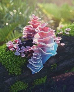 Why can't all fungi be this beautiful? (Barbie pagoda fungus) Why can't all fungi be this beautiful? (Barbie pagoda fungus),Alien & Creature References Why can't all fungi be this beautiful? Mushroom Art, Mushroom Fungi, Pink Mushroom, Garden Care, Wild Mushrooms, Stuffed Mushrooms, Plant Fungus, Amazing Nature, Belle Photo
