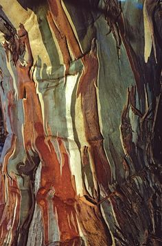 Bark of the snow gum in Australia Art Et Nature, Abstract Nature, Nature Tree, Patterns In Nature, Textures Patterns, Art Grunge, Art Texture, Tree Bark, Tree Tree
