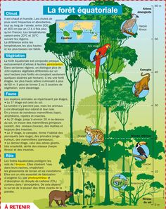 Fiche exposés : La forêt équatoriale