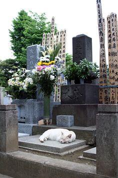 Yanaka cat, cemetery Japan