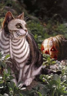 Skelly kitty