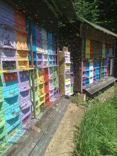 Beautiful colourful hives