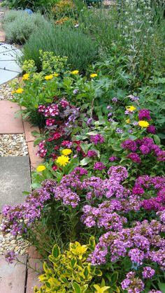 My Dorset Garden - Pauline Norris.