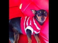 Sueter o jersey para perro tejido /crochet jersey for pets Knitting Videos, Crochet Videos, Loom Knitting, Knit Dog Sweater, Dog Sweaters, Chihuahua Clothes, Dog Dresses, Knit Patterns, Dog Life