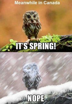 Get your laugh on to these 20 VERY Funny Spring Memes! Very Funny, Funny Cute, The Funny, Funny Owls, Funny Animals, Wild Animals, Most Famous Memes, Meanwhile In Canada, Morning Humor
