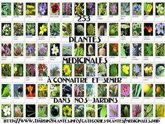 Les plantes médicinales de nos jardins