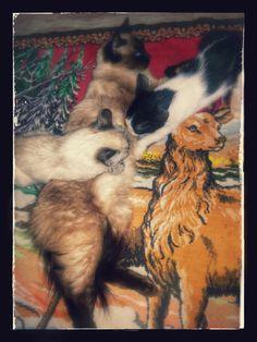 Minha louca doce paixão por gatosl Os primos dos meus Gatos        Lindos!!! Felinos na família Mamãe amamentando no tapete da Sala