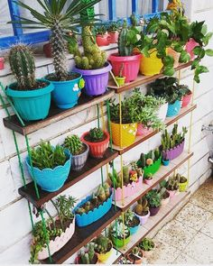 32 Awesome Easy DIY Garden Design Ideas to Build Your Dreamy Garden 32 Awesome Cacti And Succulents, Planting Succulents, Deco Cactus, Cactus Decor, Terrace Garden, Garden Boxes, Diy Garden Decor, Garden Projects, Garden Inspiration