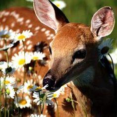 121 Best Deer Resistant Plants Images