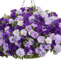 Proven Winners - True Beauty combination container recipe containing Supertunia® Blue Skies - Petunia hybrid, Supertunia® Royal Velvet (Retired March Proven Winners Flowers, Hanging Plants, Flower Pots, Plants For Hanging Baskets, Purple Garden, Types Of Flowers, Petunias, Hanging Garden, Container Gardening Vegetables