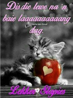 Greetings For The Day, Goeie Nag, Afrikaans Quotes, Sweet Quotes, Sleep Tight, Prayer Quotes, Day Wishes, Morning Messages, Sweet Dreams