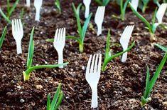 Veľký výber užitočných a dobrých nápadov pre efektívnejšie pestovanie rastlín v črepníkoch aj v záhrade | Babské Veci Roses In Potatoes, Organic Gardening, Gardening Tips, Gardening Services, Gardening Supplies, Indoor Gardening, Rose Cuttings, Best Garden Tools, Plastic Forks