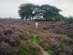 Ben ik zelf, midden in de bloeiende heide, Blaricum. (Eigen foto)