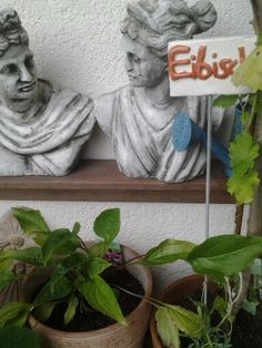 Eibisch