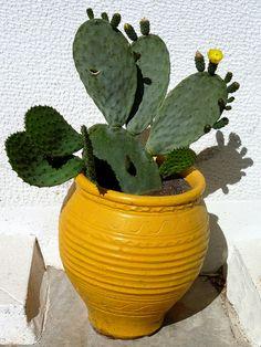 Cactus and pot Yellow pot with cactus  plant.