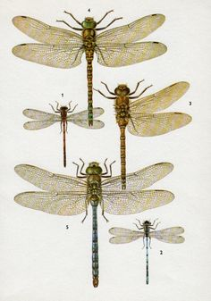 vintage++DRAGON+FLY+print+DRAGONFLY+by+theStoryOfVintage+on+Etsy,+$16.00