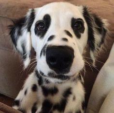 Cutest blog on internet Vet student blog! #vettechlife #veterinary #veterinarian