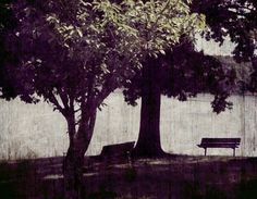 Fine Art  Park Bench Photograph by ChaiseLongueGallery on Etsy, $8.00