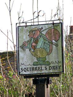 squirrel drey construction - Google Search