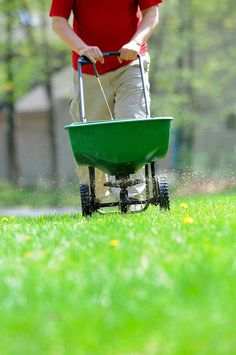 Overseeding — as part of a comprehensive, proactive plan — keeps lawns looking grea
