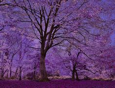 I don't like purple that much, but this is beautiful!