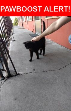 Is this your lost pet? Found in Portland, OR 97202. Please spread the word so we can find the owner!  Black cat, solid built but not fat. Tail is thick to the end & kitty carries it up high when walking. Immediately approached me for attention and pets. Hisses at other cats. Has yellow green eyes, not visible in the picture.    Kitty has a high pitched meow and is relatively talkative.    Has a black leather look collar with no tags.    10-12 pounds or so.    Near SE 28th Ave & SE Gladstone…