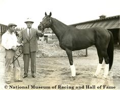 Whirlaway was the only horse in history to win the Triple Crown and Saratoga's Midsummer Derby. Photo courtesy of the National Museum of Racing and Hall of Fame. Clydesdale Horses, Thoroughbred Horse, Breyer Horses, Barrel Racing Horses, Horse Racing, Pretty Horses, Beautiful Horses, The Belmont Stakes, Triple Crown Winners