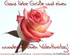 Valentines Day, Rose, Flowers, Plants, Amor, I Want You, You Are Wonderful, Photos, Photo Illustration