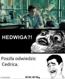 Memy z Harrego Potter'a ; w Losowo- # Losowo # amreading # books # wattpad Harry Potter Mems, Harry Potter Cast, Harry Potter Fan Art, Harry Potter Fandom, Wtf Funny, Funny Memes, Jokes, Funny Lyrics, 5 W
