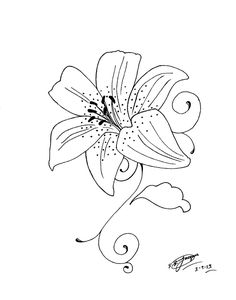 25 Best Tiger Lily Tattoo Drawings Images Lillies Tattoo Tiger