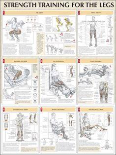 legs workout anatomy