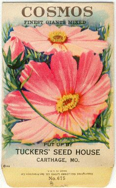 Vintage Flower Seed Packet Tuckers Seed House Lithograph COSMOS!!! (Carthage, Missouri)